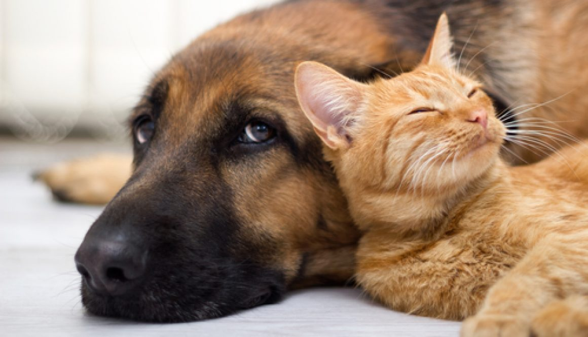 Are you a cat or dog person?